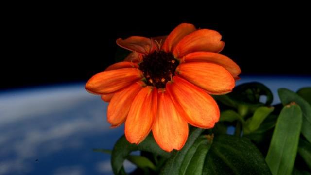 """Sulla Stazione Internazionale boccia il primo """"Space Flower"""""""