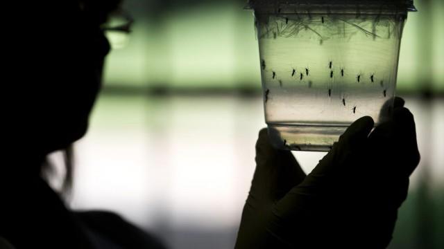 Virus Zika: tutto ciò che bisogna sapere della nuova emergenza sanitaria