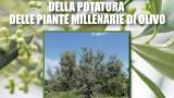 """""""Introduzione alla pratica della potatura delle piante millenarie di olivo"""" a Tivoli con il consigliere regionale Laura Cartaginese"""