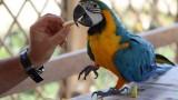 Grandi pappagalli esotici, un allevamento di qualità nell'Alto Milanese