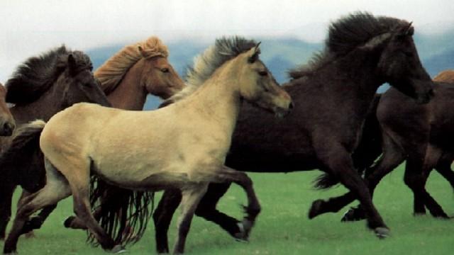 1° Torneo Di Equitazione. L'Asd Equestre Montecelio Organizza Il Torneo De I Cinque Cantoni.