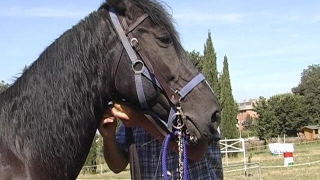 Febbre Da Cavallo. Terzo Appuntamento Per Gli Amanti Dei Cavalli.
